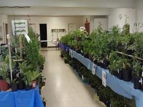 Plant Sale Photos