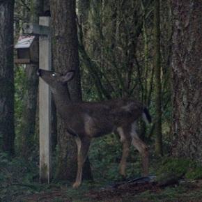 It that time again – Deer Repellent Recipe – eggs &water!