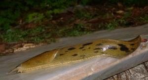 Slug2_325h