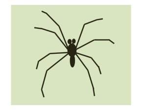 SpiderJPEG