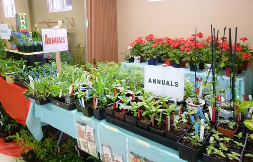 Annuals&Geraniums_325h