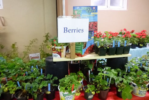 Berries_325h
