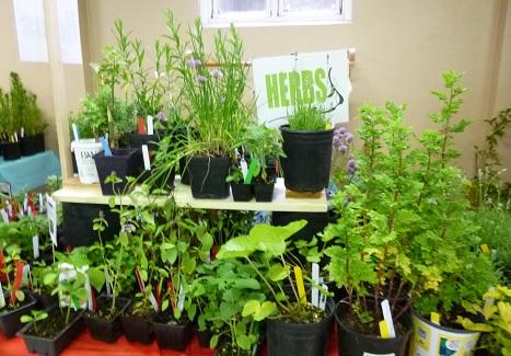 Herbs_325h
