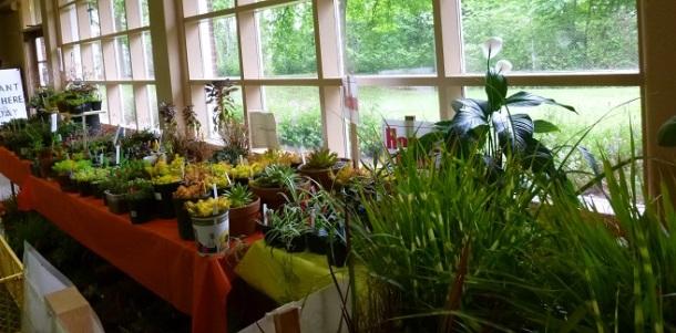 Succulents_325h