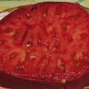 Tomato List Preview – PLANT SALE  Saturday, May 14,9am-3pm