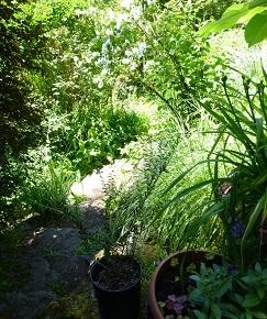 Mar 23 Speaker – The Soil Food Web – JoanVeatch