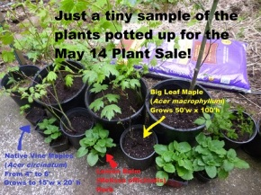 Tiny teaser list of plants for the May 14 Plant Sale!