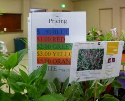 16_Pricing_325h
