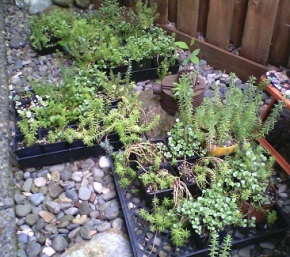 Succulents, Sedums & Flower Baskets – Plant Sale – May 14, Sat