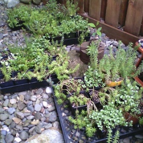 Succulents, Sedums & Flower Baskets – Plant Sale – May 14,Sat