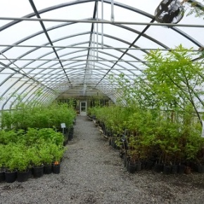 Native Plants & Vegetable Sale – Apr 27 & 28, 10am-3pm – CASEE Center