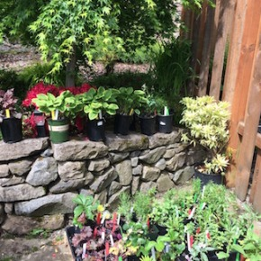 Plant Sale List is here!  (Community Garden Club of Camas Washougal)