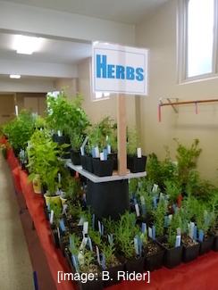 FF_Herbs
