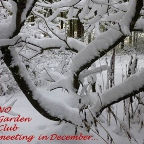 NO Garden Club meeting during December